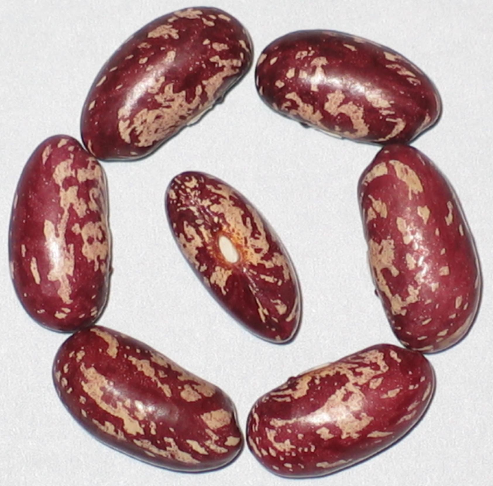 recipe: speckled cranberry pole bean [36]