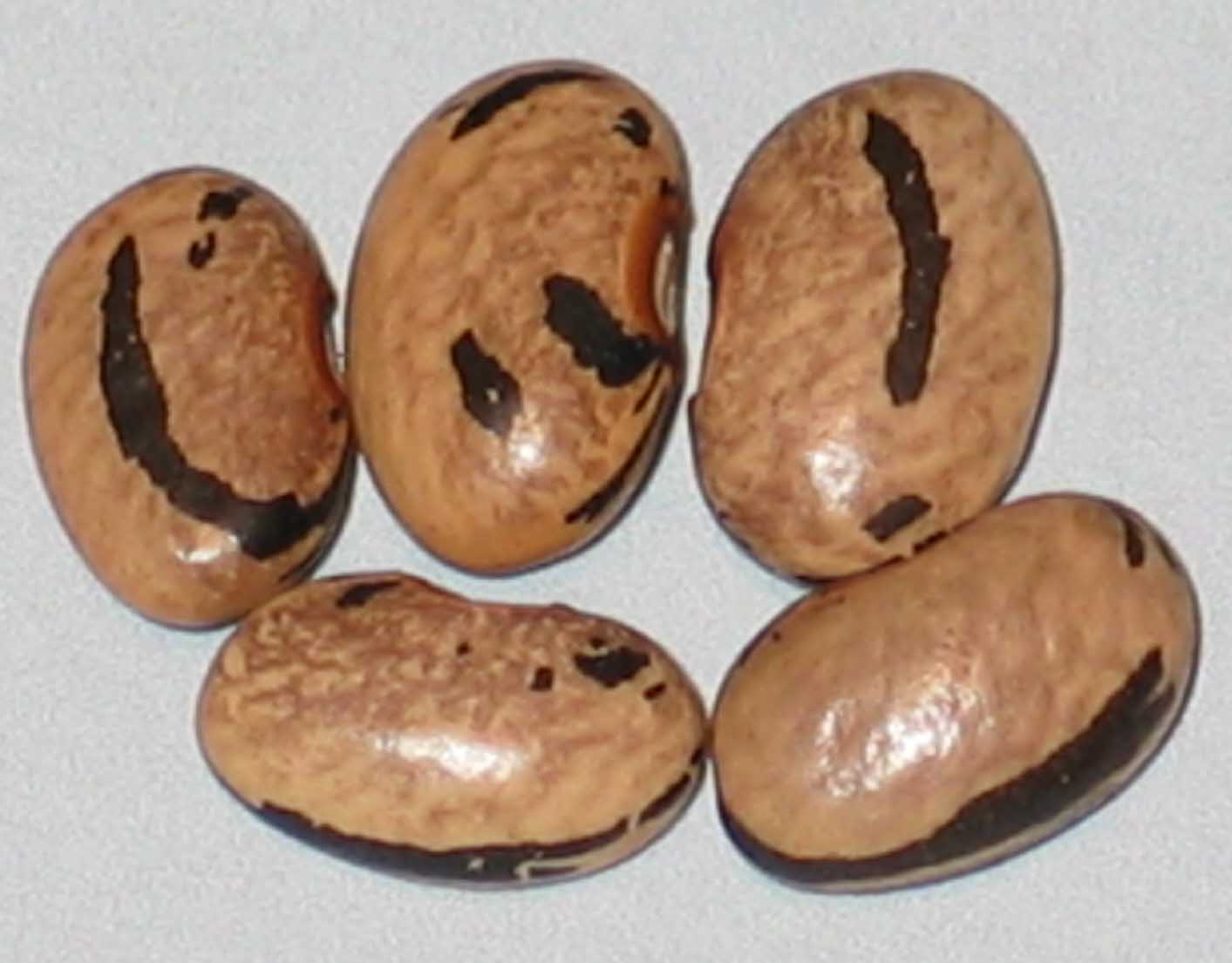 image of  Bedessia Mosaic beans