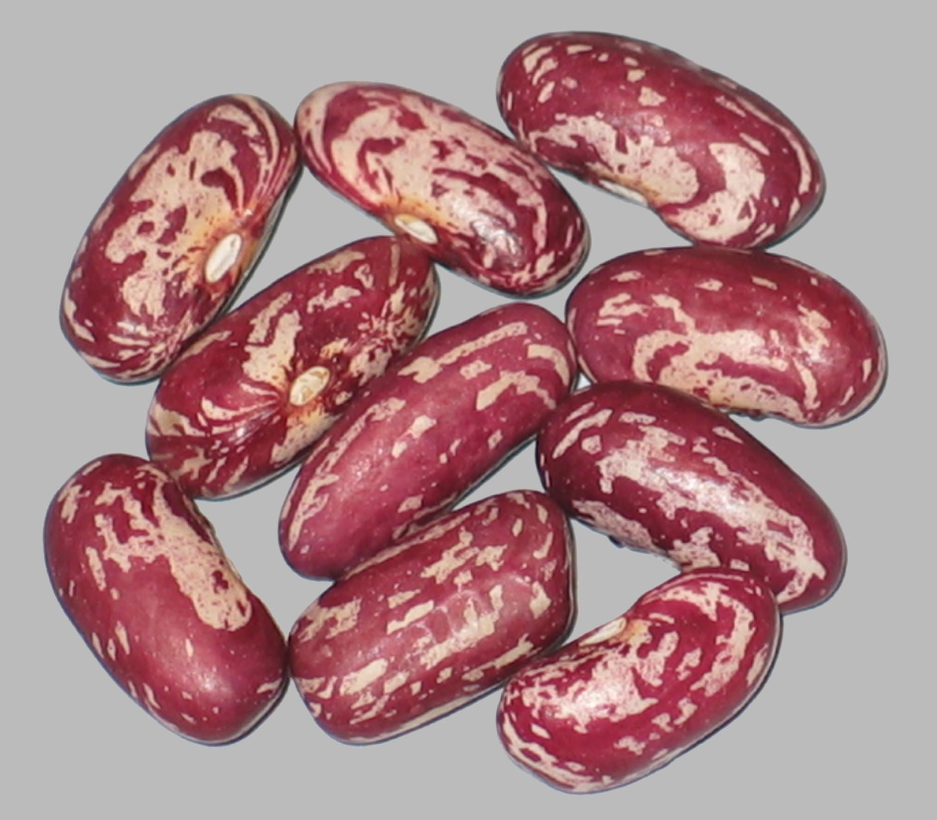 image of CIAT Bean G-8043  beans